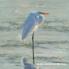 """Egret Shimmer I"" 24"" x 24"" Giclee print on canvas"