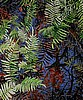 Fern Abstract