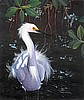 Egret in the Cool