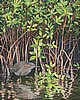 Green Heron Haven