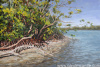 Mangroves in Paradise 24x36