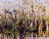 Magic and Mystery of the Big Cypress Preserve